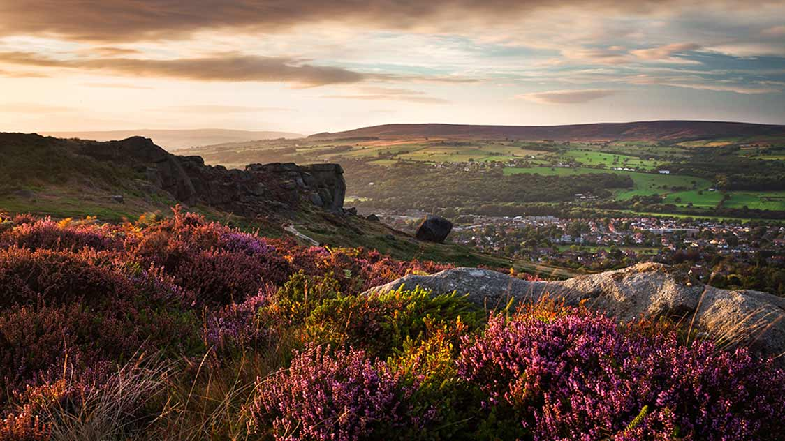 Ilkley Heather